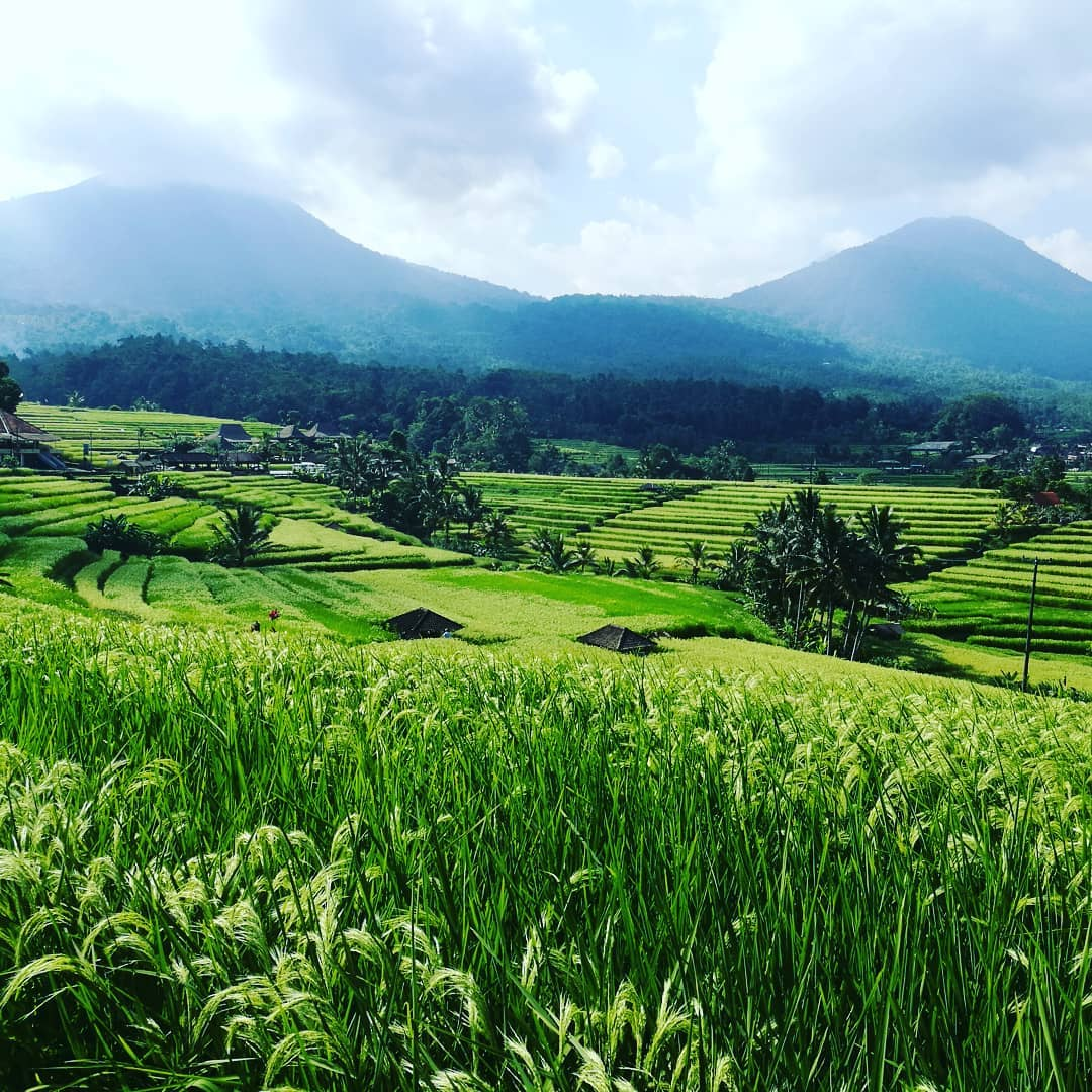 UNESCO protected rice field
